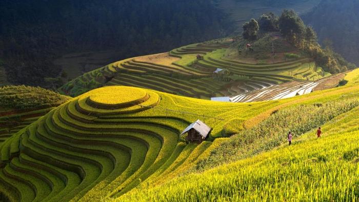 Rice-scape-Mu-Cang-Chai-Vietnam