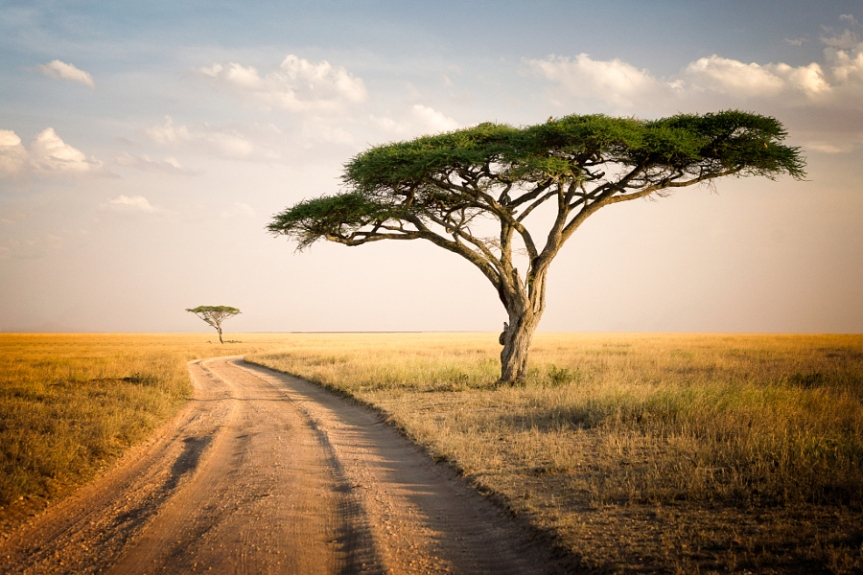 A landscape from the Serengeti National Park in Tanzania.