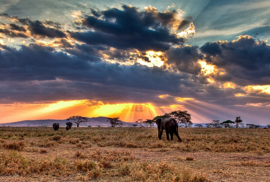 elephants-serengeti-national-park-tanzania-3918228439
