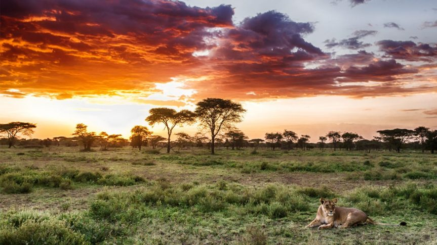 Serengeti National Park ,Tanzania