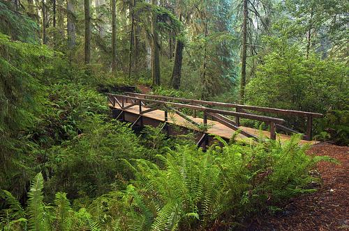 redwood-national-park-steve-d