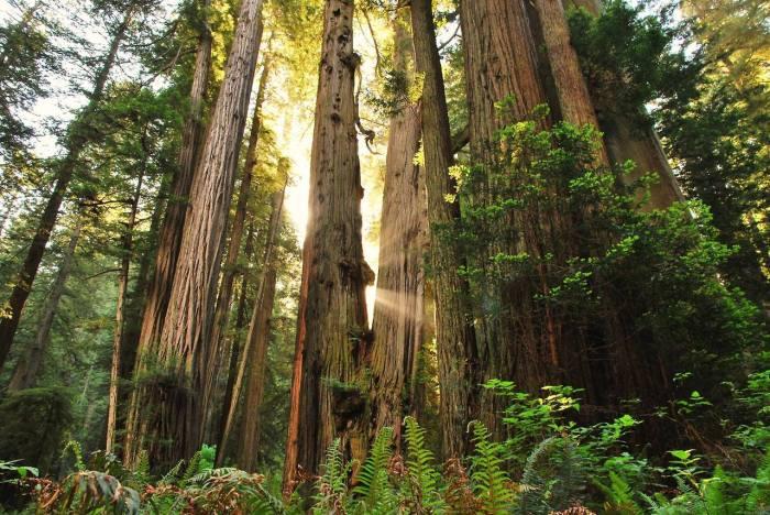 redwood-np-01