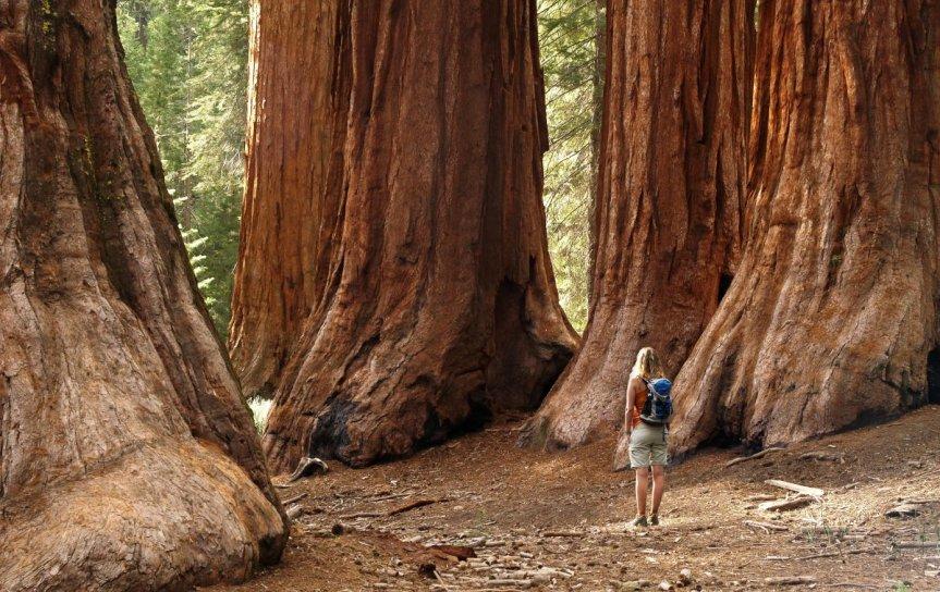 Redwood National Park ,California